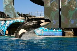 court_case_whale